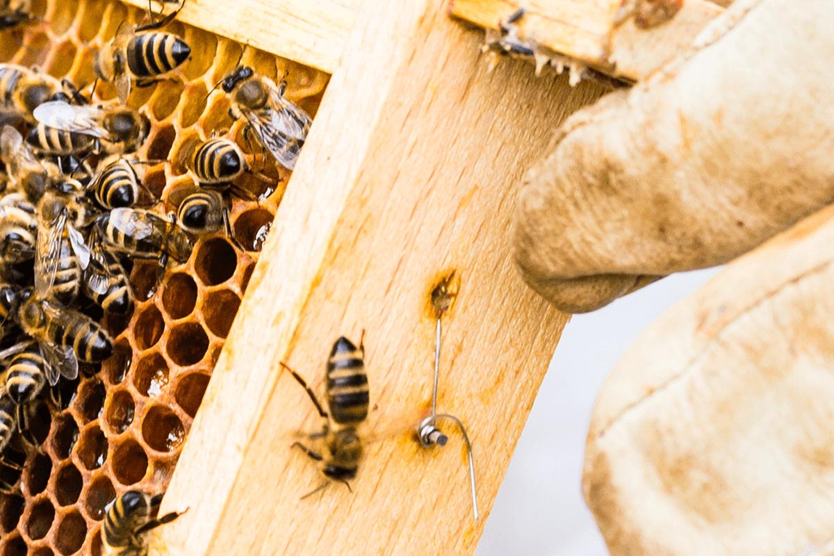 U houdt van de bijen? Wij ook.