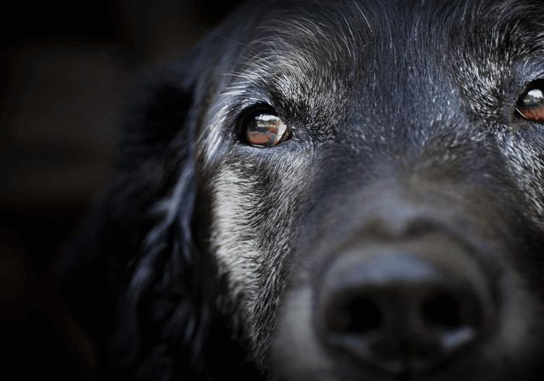 Beschermt u uw huisdieren tegen hondsdolheid? Wij ook.